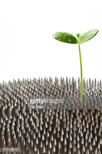sprout growing  from pin holder