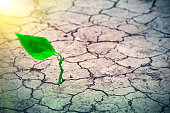 Green sprout on the surface of the dry cracked land in the rays of the sun. Environmental disaster. Severe drought and lack of moisture in the soil. Dead ground and consequences of abnormal heat.