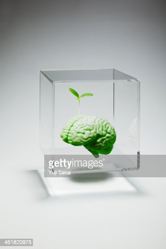 sprout growing in  model of human  brain in case