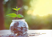 Hope of investor concept,Sprout growing on money pile of glass jar bank