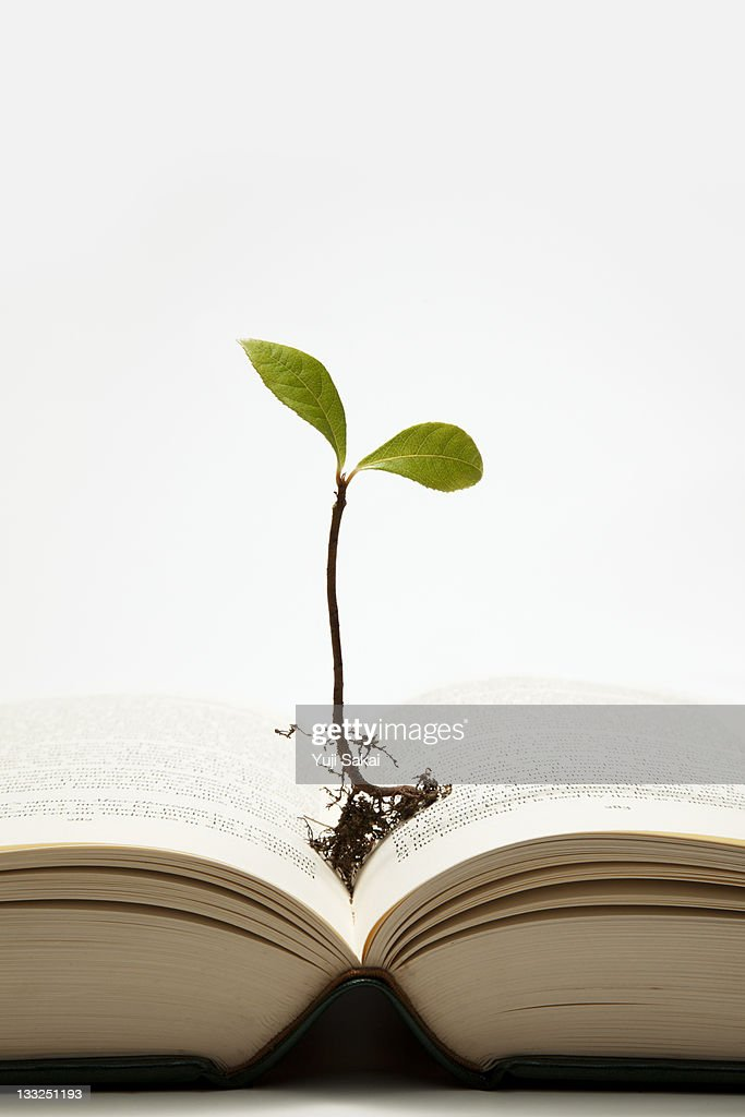 sprout growing  on the book