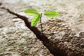 A young plant growing out of concrete. Concept of hope or business break through