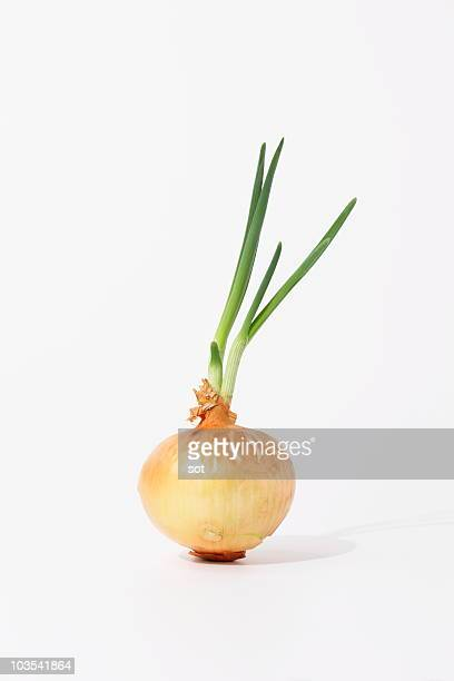 Sprout onion