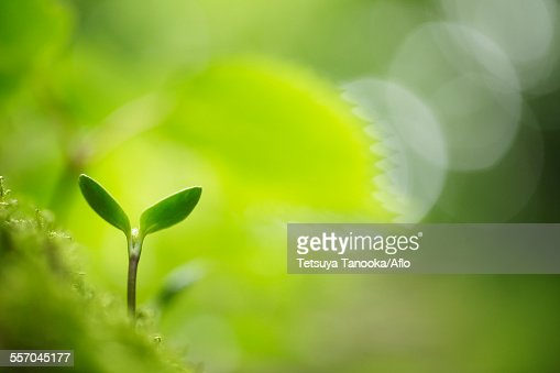 Sprouting leaves