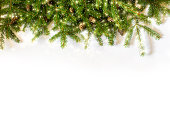 spruce branches on white background