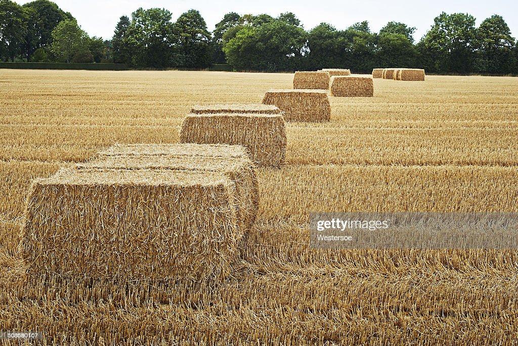 Square bales in einem Feld : Stock-Foto