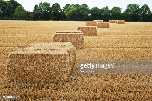 Square bales dans un champ : Photo