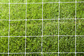 Square pattern on grass