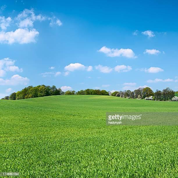 XXXXL 30MPix Square Frühling Landschaft mit Wiese, blauer Himmel,