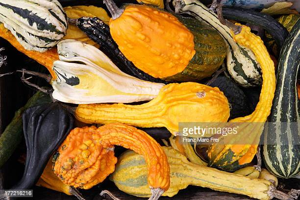 Squash at a sales stand at a country store