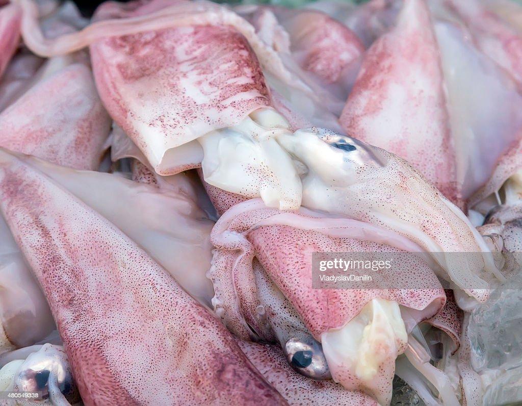 Calamar materias primas : Foto de stock