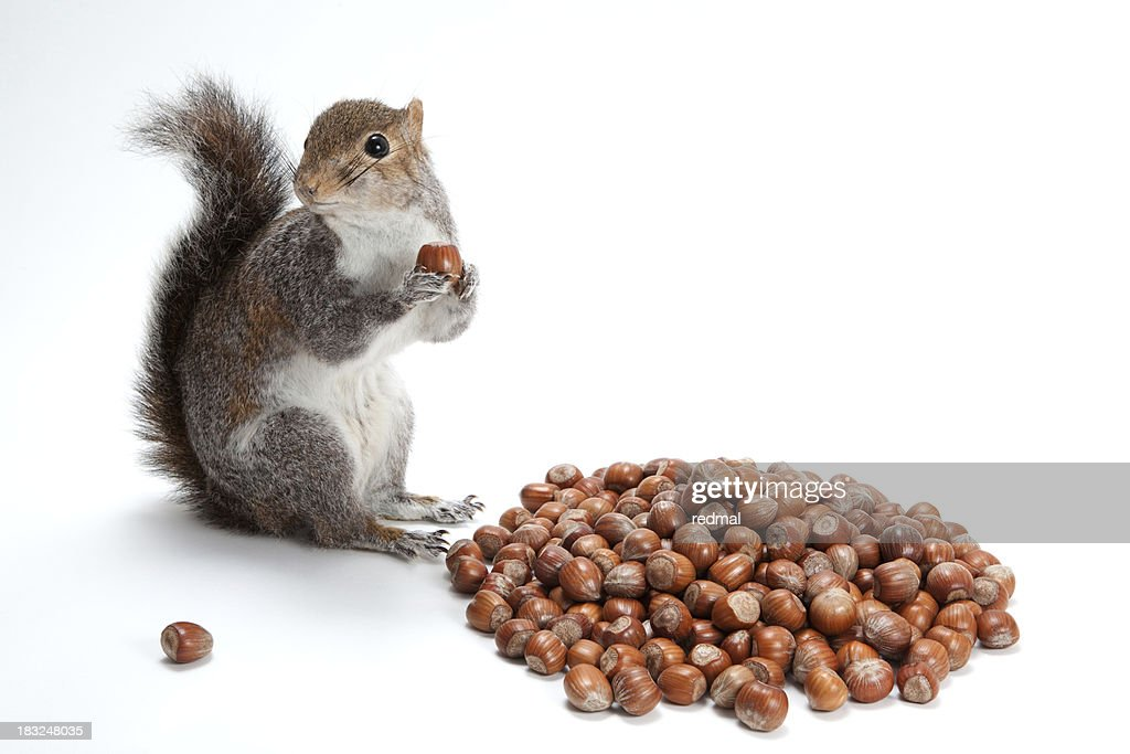 squirelling nuts