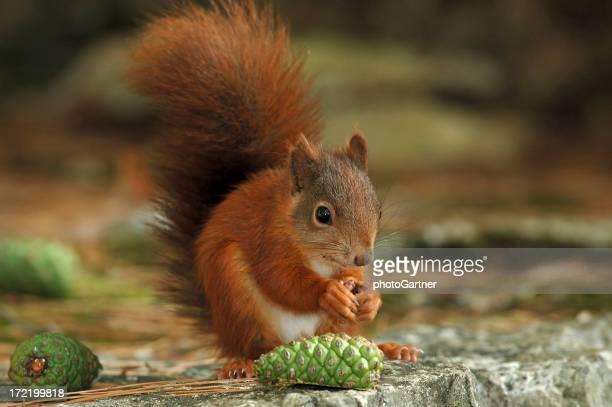 Squirrel 04