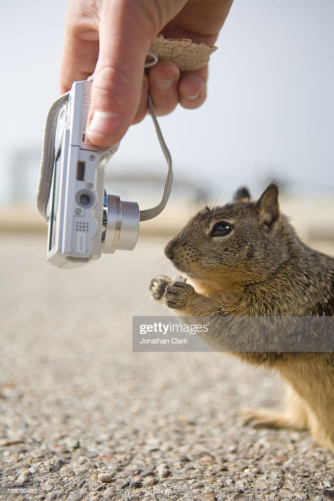 Squirrel and Camera : Stock Photo