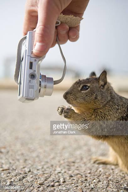 Squirrel and Camera
