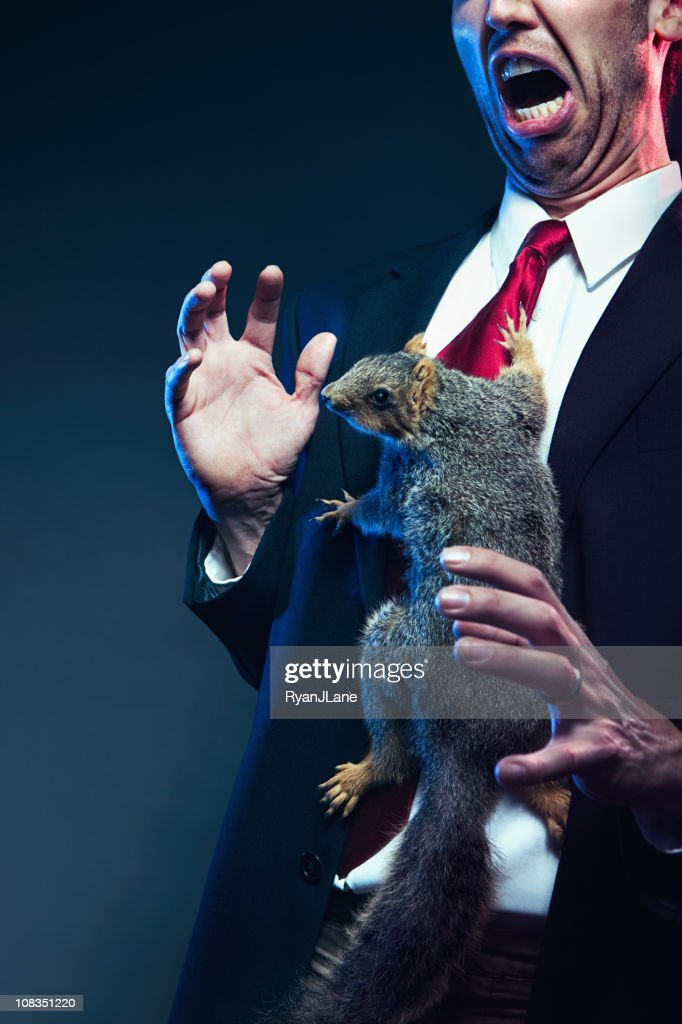 Squirrel Attack In The Office : Stock Photo