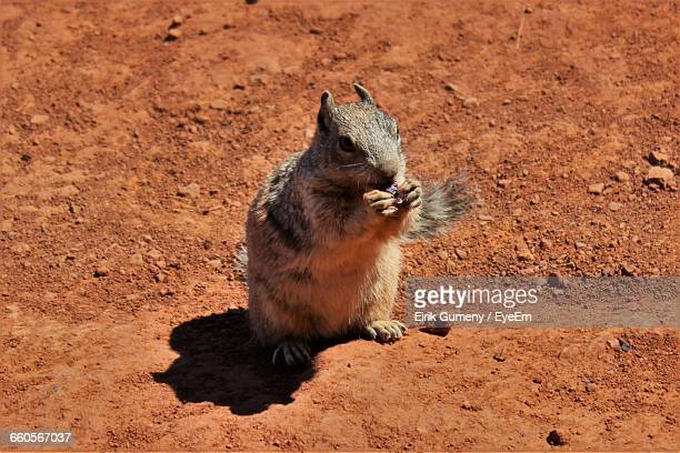 Squirrel Eating Food On Field During Sunny Day