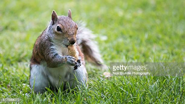 Squirrel enjoying time at St. James's Park, London