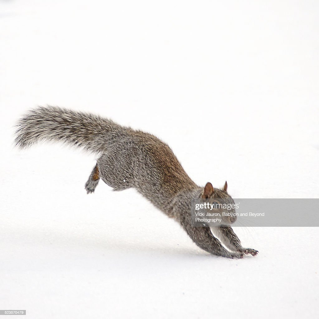 Squirrel Frolicking in the Snow