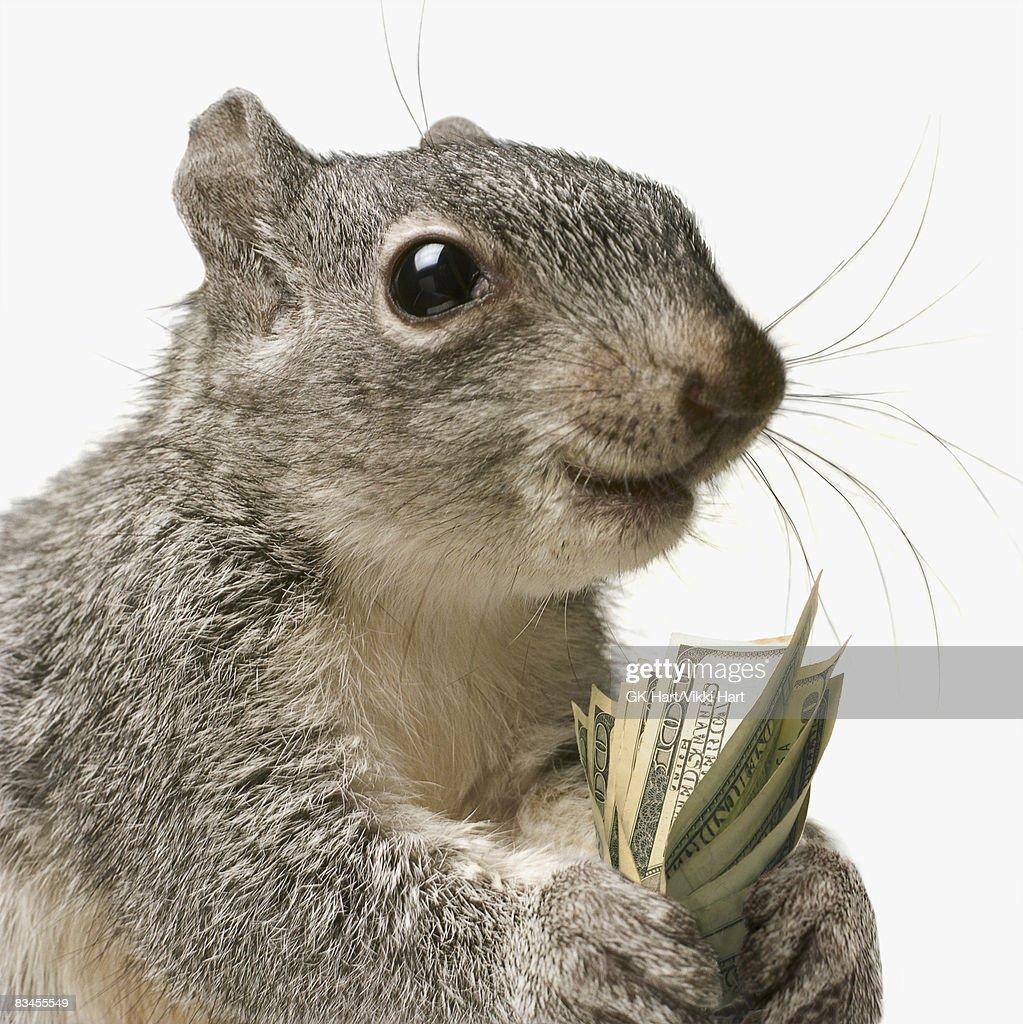 Squirrel holding money