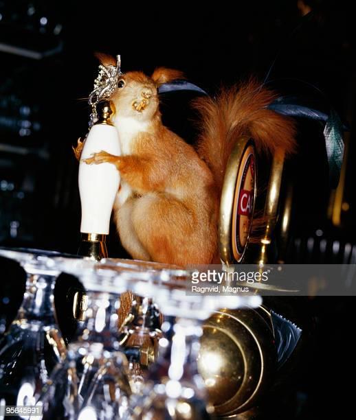 Squirrel in a bar, Denmark.