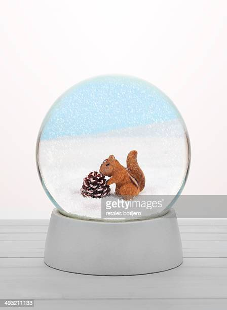 Squirrel in snow globe.