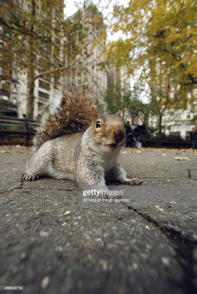 A squirrel in the park : Stock Photo