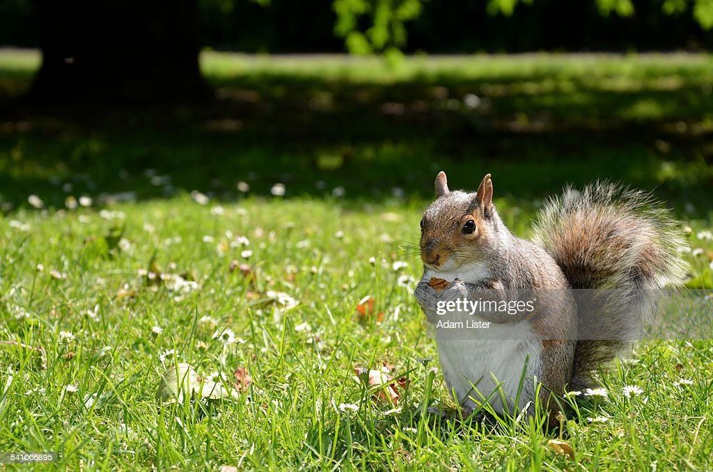 Squirrel in the sun
