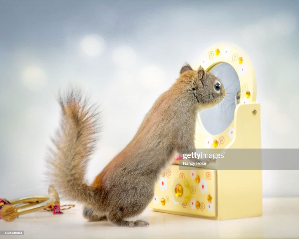 Image result for squirrel at mirror