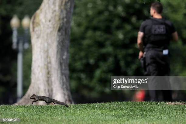 A squirrel moves past a Secret Service officer as he stands guard on the North Lawn of the White House following a temporary lock down May 31 2017 in...