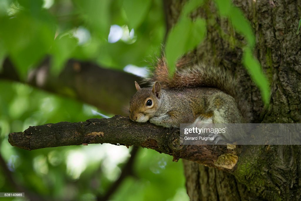 Squirrel on a tree's branch