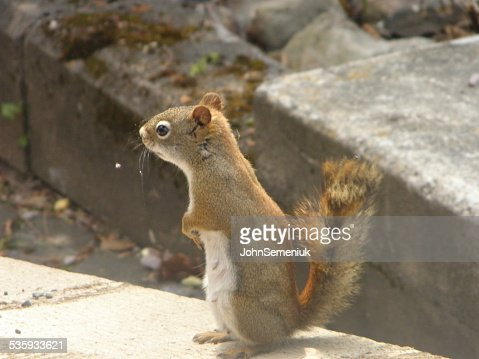 squirrel on board in spring. : Stock Photo