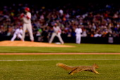 A squirrel runs on the infield during the fourth inning of a game between the Philadelphia Phillies and the Colorado Rockies at Coors Field on April...