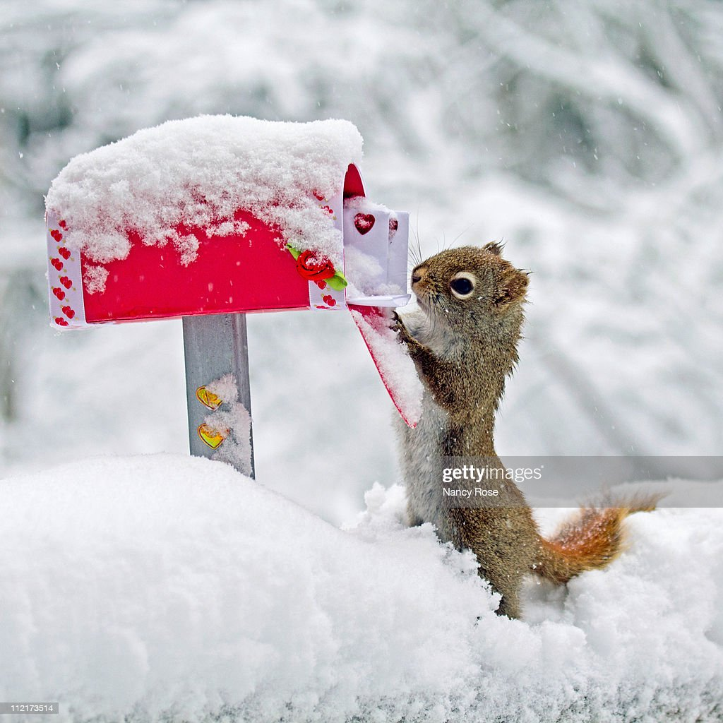 Squirrel searches for Valentines in snowy mailbox
