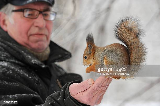 A squirrel sits a mans hand in a park in Moscow on December 30 2010 Icy rain fell in Moscow covering streets trees and cars with ice while...
