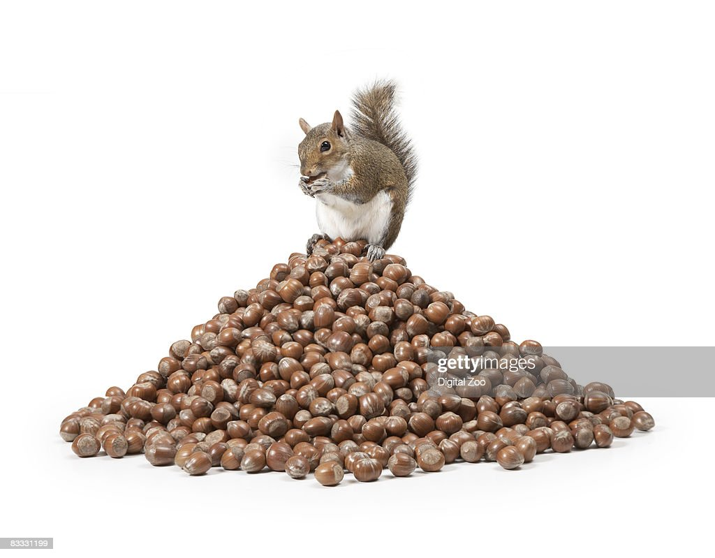 Squirrel sitting on pile of nuts : Stock Photo