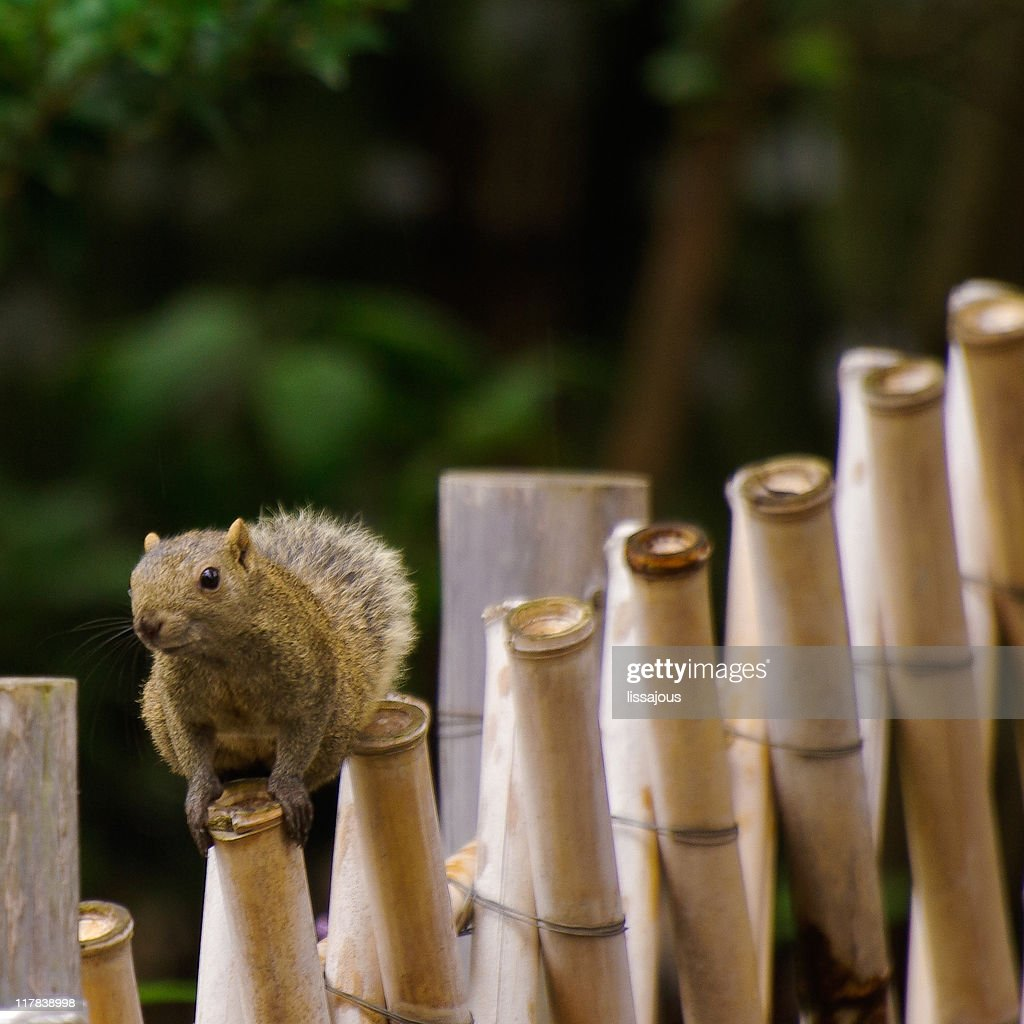 Squirrels in shrine