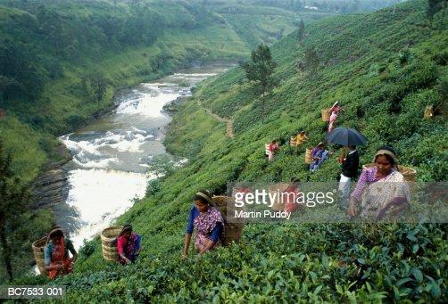 Sri Lanka, tea-pickers working above waterfall : Stock Photo