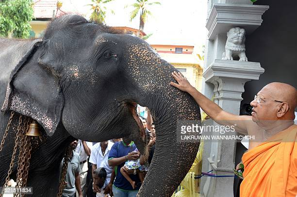 A Sri Lankan Buddhist monk anoints a temple elephant in the Bellanvila suburb of Colombo on April 16 as part of traditional new year rituals The...