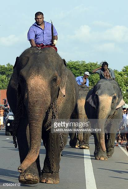 Sri Lankan mahouts ride elephants as part of traditional festival games held to mark the Sinhala and Tamil New Year in Homagama near Colombo on April...