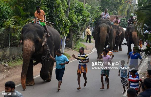Sri Lankan mahouts ride elephants past spectators in Piliyandala near Colombo on April 14 as part of traditional festival games held to celebrate to...