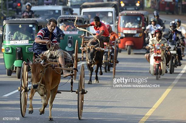 Sri Lankan participants control their bulls during a traditional cart race in Piliyandala near Colombo on April 18 2015 to mark the Sinhala and Tamil...
