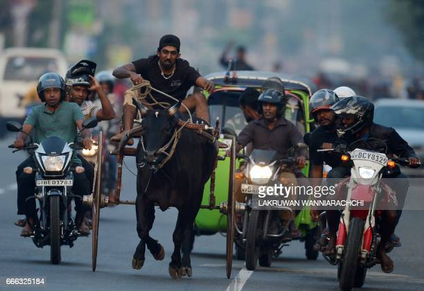 Sri Lankan participants control their bulls during a traditional cart race to mark the Sri Lanka National New Year in Kaduwela near Colombo on April...