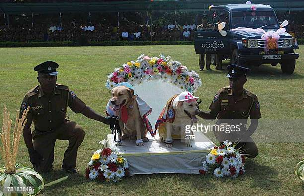 Sri Lankan police hold a pair of sniffer dogs at a 'wedding' of nine dog couples in the central Sri Lankan town of Kandy on August 26 2013 Sri...