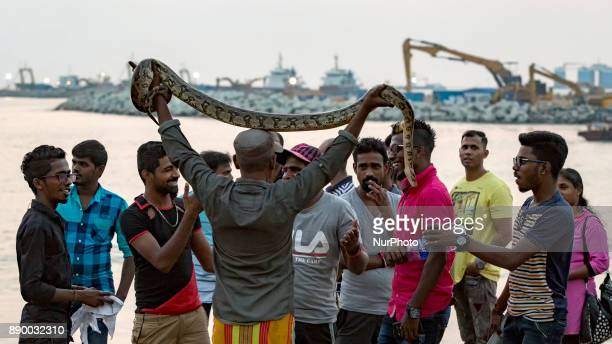 A Sri Lankan snake charmer lifts up a fullgrown pet python reptile over his head enticing people to wrap the python in their necks at one of the more...