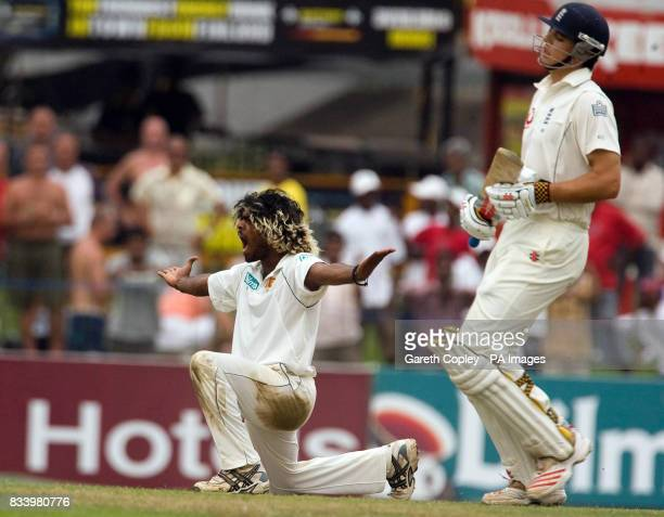 Sri Lanka's Lasith Malinga celebrates after trapping England''s Alastair Cook LBW during the Second Test at the Sinhalese Sports Club Ground Colombo...