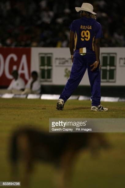 Sri Lanka's Lasith Malinga stands in the background as a dog interrupts play