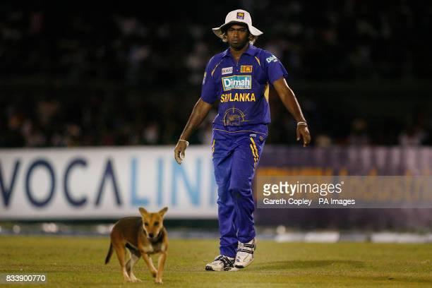 Sri Lanka's Lasith Malinga with dog during the Third One Day International at Rangiri Dambulla International Cricket Stadium Danbulla Sri Lanka