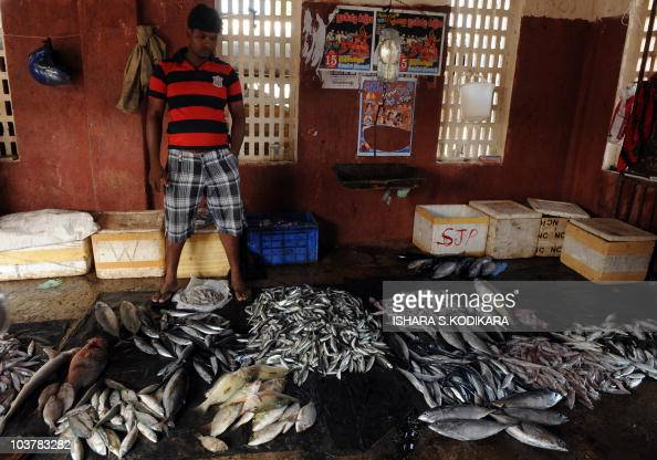 SriLankaenvironmentfishing FEATURE by Mel Gunasekera This photo taken on August 19 2010 shows a Sri Lankan fish vendor looking at his stock in the...