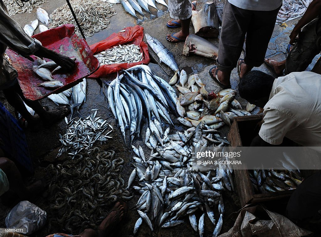 SriLankaenvironmentfishing FEATURE by Mel Gunasekera This photo taken on August 19 2010 shows a Sri Lankan vendor arranging his stock at a fish...